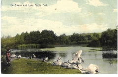 postcard,poole,dorset,england,the lake and swans, c1911.#2875